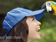 Promo Kartu Kredit CIMB Niaga di Bali Bird Park Diskon tiket masuk 10%