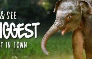 Promo CIMB Bali Safari Marine Park Buy 1 Get 1 Free
