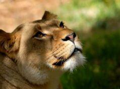 Taman Safari Cisarua Bogor tempat wisata di bogor paling populer di kalangan wisatawan