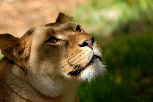 HTM Taman Safari Cisarua Bogor