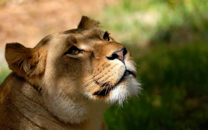 Taman Safari Cisarua Tiket Atraksi Satwa September 2019
