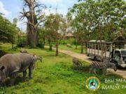 Harga Tiket Masuk HTM Domestik 2015 Bali Safari Marine Park