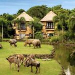 Bali Safari Marine Park Mara River Lodge