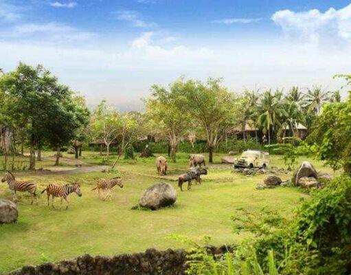 Bali safari Marine Park kehidupan hewan liar