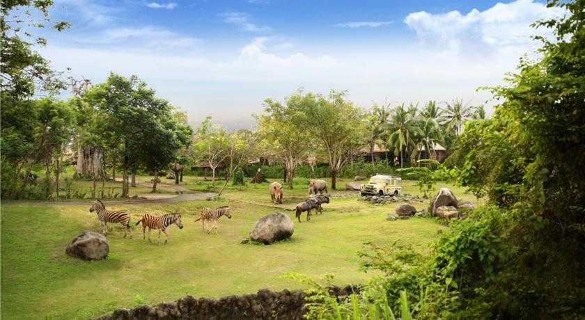 Bali Safari Marine Park Wisata Edukasi Anak Dan Keluarga