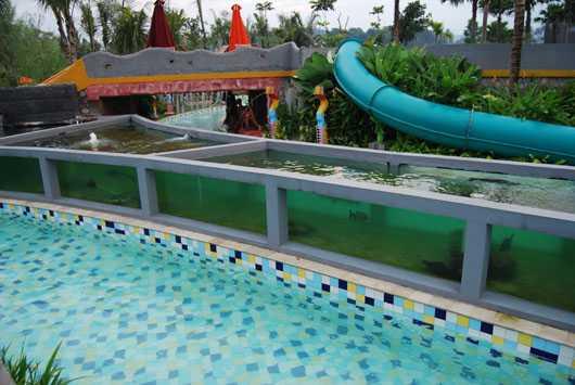 Jungle Bogor Aquarium Raksasa