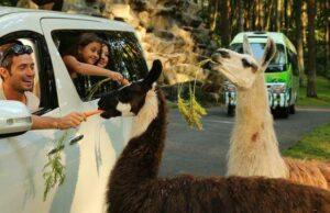 promo taman safari prigen