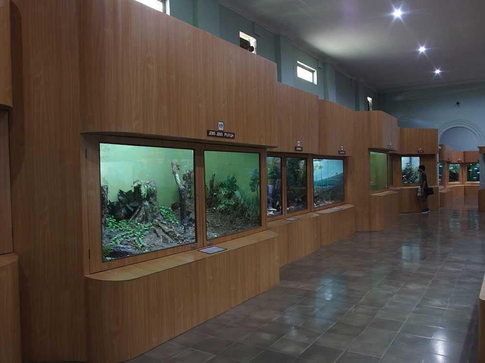 Museum Zoologi Bogor Tiket Masuk Gratis September 2020 Travelspromo