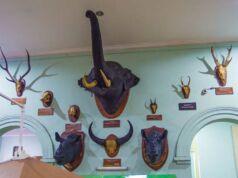 Kepala satwa yang diawetkan di Museum Zoologi Kebun Raya Bogor