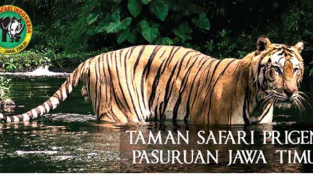 Taman Safari Prigen Tiket Wahana Agustus 2019 Travelspromo