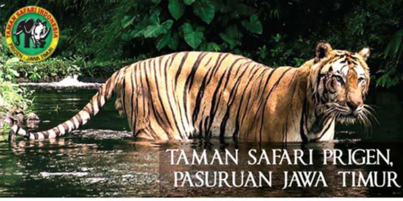 Taman Safari Prigen Tiket 10 Wahana Seru April 2021 Travelspromo