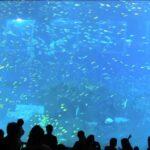 Giant Aquarium