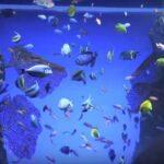 Beragam Spesies Ikan