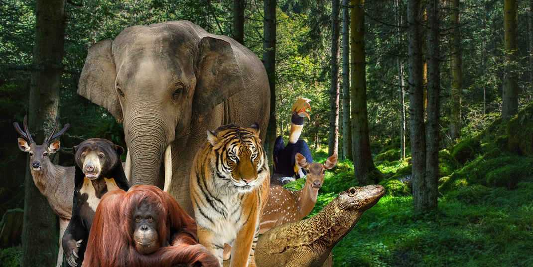 Image result for kebun binatang ragunan