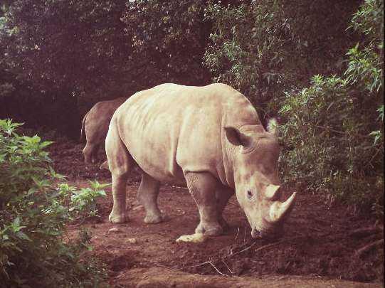 badak taman safari cisarua bogor