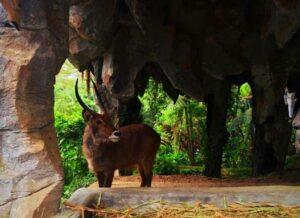 Tiket Taman Safari Cisarua untuk menyaksikan berbagai atraksi