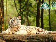 Promo Taman Safari Prigen Pasuruan