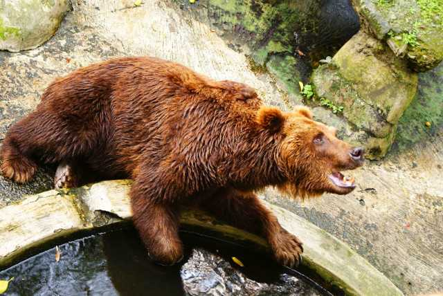 Kebun Binatang Bandung Tiket 9 Atraksi Maret 2019 Travelspromo