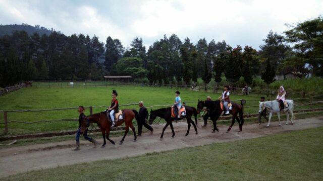 naik kuda mengelilingi peternakan