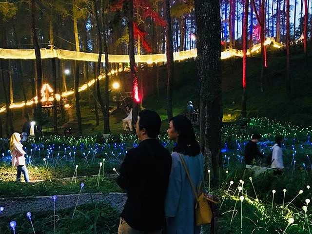 taman romantis orchid forest bandung