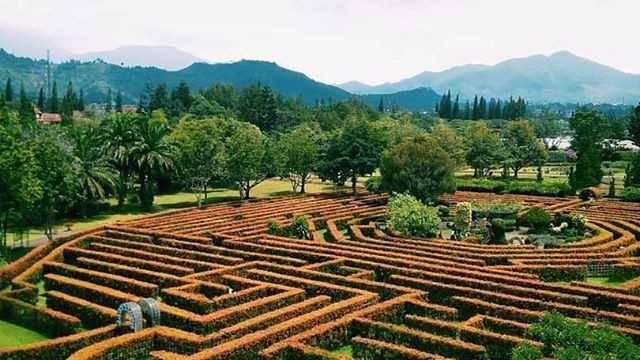 taman maze