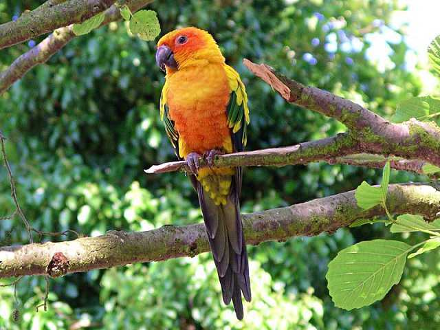 Batu Secret Zoo Burung San