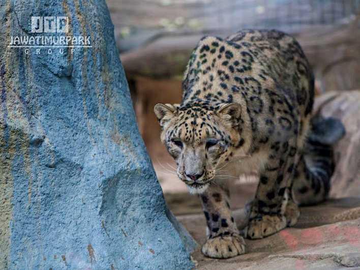 Batu Secret Zoo Tiket 10 Zona September 2020 Travelspromo