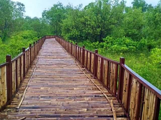 wisata mangrove surabaya