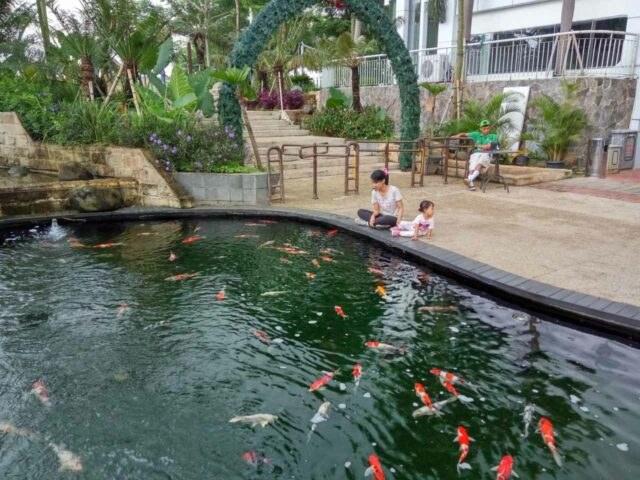 kolam ikan koi scientia square park