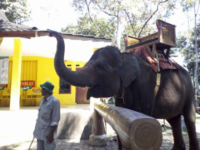menunggang gajah lembah hijau