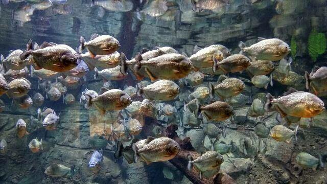 penyelam memberi makan ikan