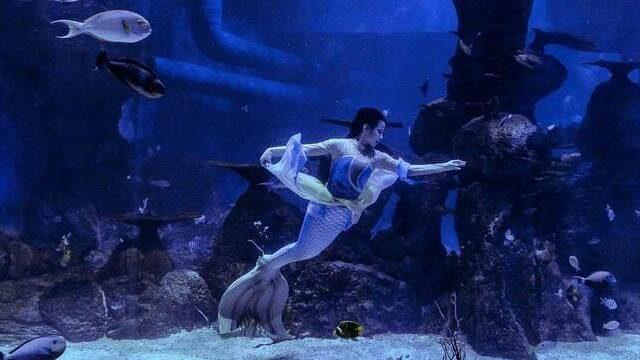 Salah satu pertunjukkan yang sering diadakan di Jakarta Aquarium