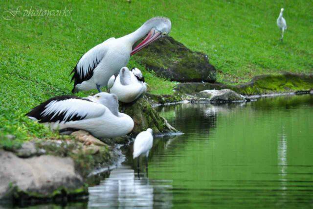 taman burung dan bekisar taman mini
