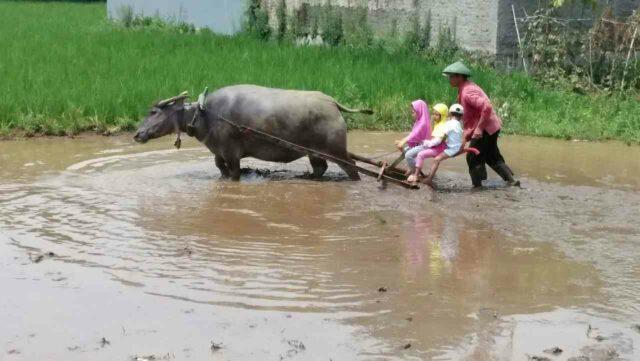 belajar membajak sawah di Kampung Batu Malakasari