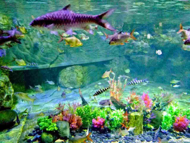 ikan warna-warni di aquarium seaworld ancol