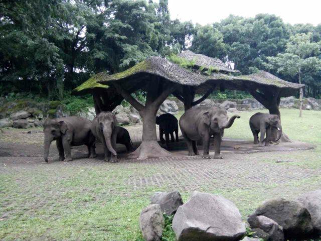 hewan gajah di taman safari prigen