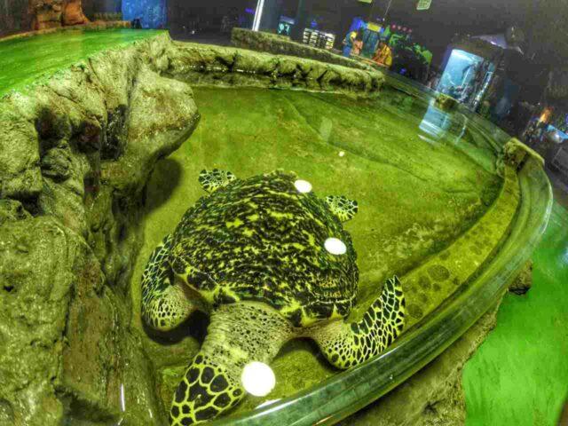 reptilia kura-kura di aquarium seaworld ancol