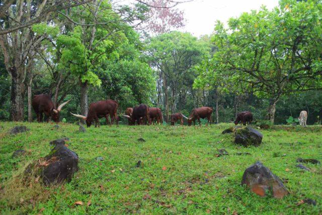 satwa hidup bebas seperti di habitat asli