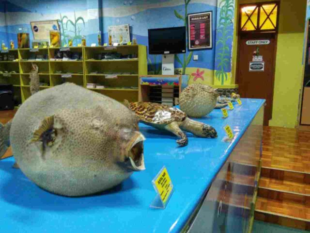 museum biota laut