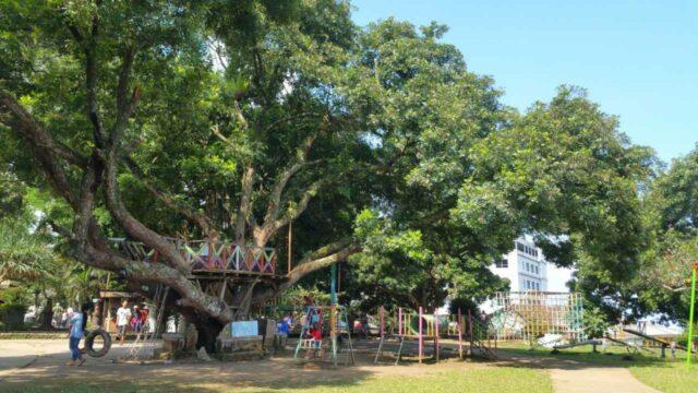 rumah pohon dan taman outbond
