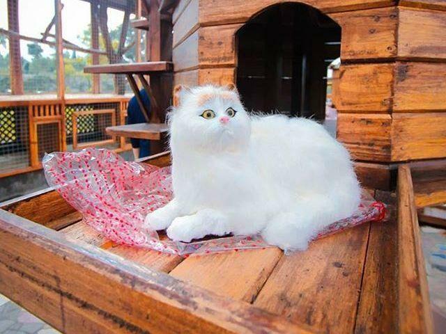 Rumah kucing dengan kucing-kucing lucu