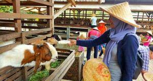 Kuntum Farmfield Nursery Bogor