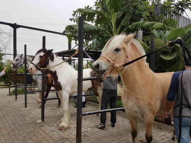 naik kuda di branchosto tangerang