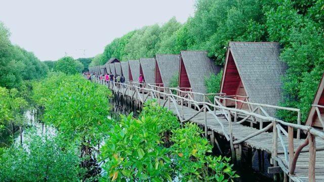 penginapan villa hutan mangrove jakarta