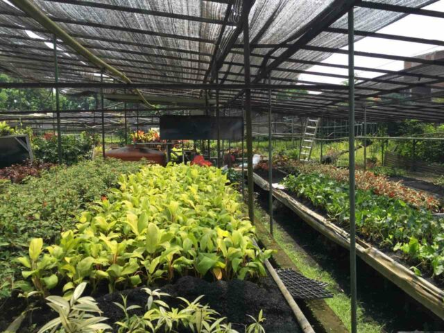 Nursery Godong Ijo Depok