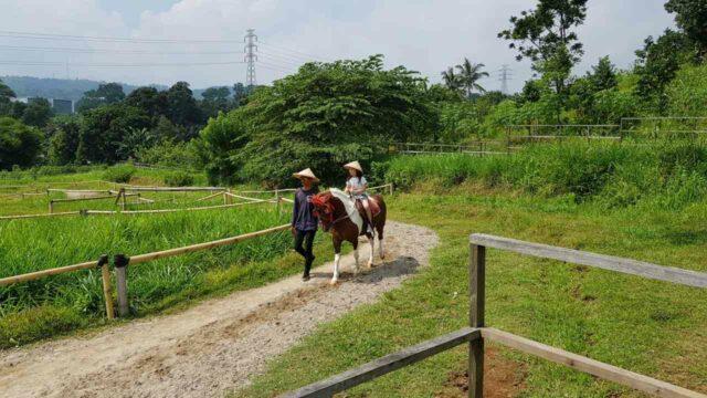 naik kuda kuntum farm field