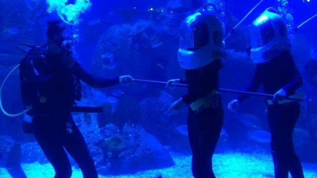 Aktivitas Aqua Trekking Jakarta Aquarium