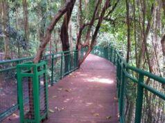 huntung foto forest walk babakan siliwangi