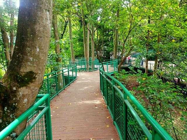 trek jembatan forest walk babakan