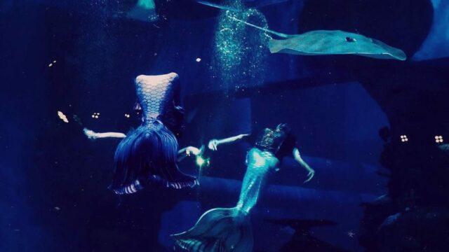 atraksi berenang bersama hiu